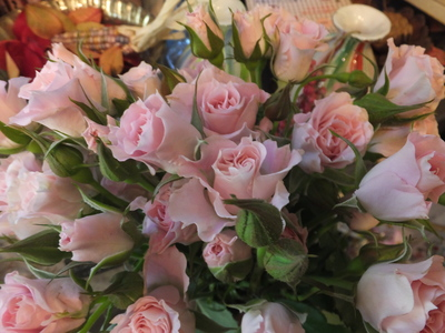 オークリーフ(十月桜)_f0049672_1853774.jpg