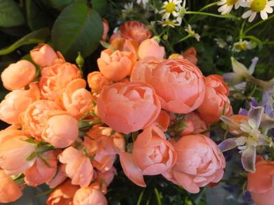 オークリーフ(十月桜)_f0049672_187065.jpg
