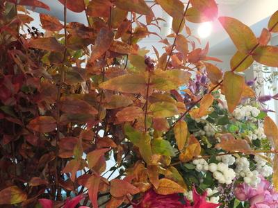 オークリーフ(十月桜)_f0049672_1885555.jpg
