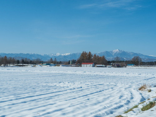 11月上旬・雪景色とカラマツの紅葉、そして・・エゾリス君がコラボ!_f0276498_23044046.jpg
