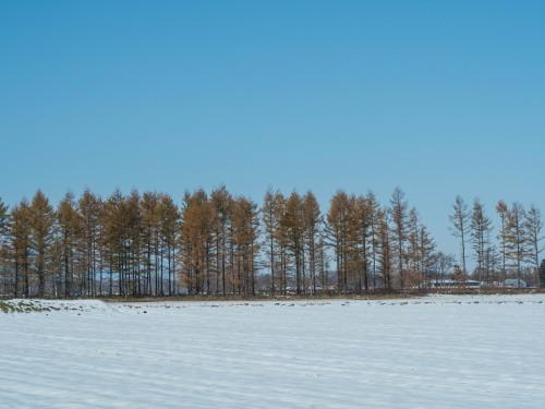 11月上旬・雪景色とカラマツの紅葉、そして・・エゾリス君がコラボ!_f0276498_23050406.jpg