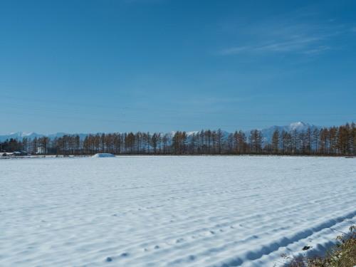 11月上旬・雪景色とカラマツの紅葉、そして・・エゾリス君がコラボ!_f0276498_23055405.jpg