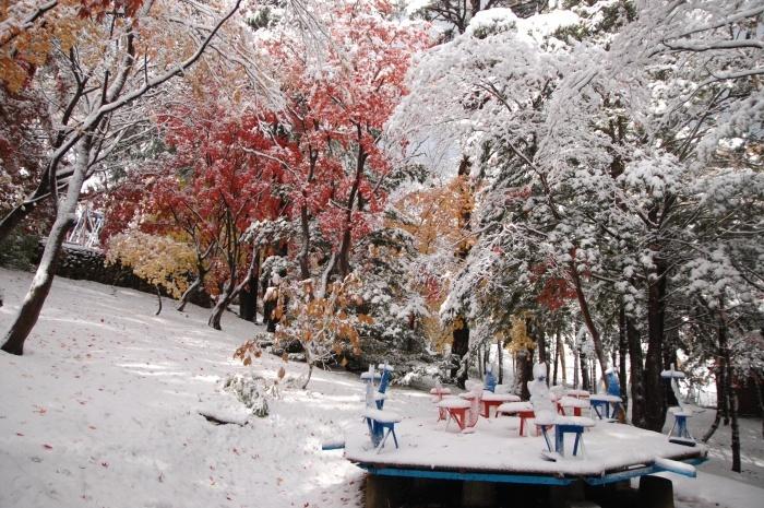この秋も 中野植物園_c0125899_14464065.jpeg