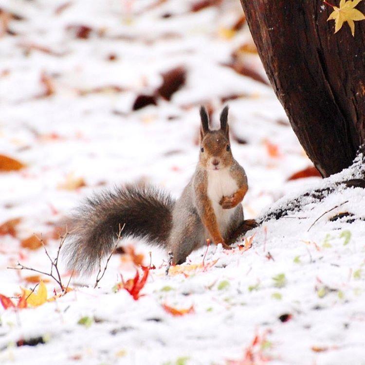 この秋も 中野植物園_c0125899_14473656.jpeg