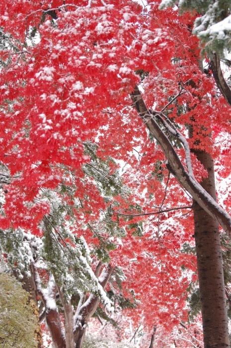 この秋も 中野植物園_c0125899_14480250.jpeg