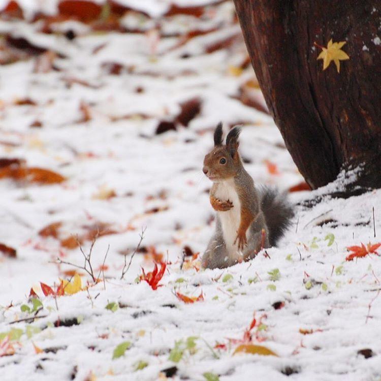 この秋も 中野植物園_c0125899_14490121.jpeg