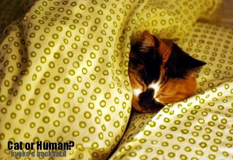 猫なのか、人間なのか?_b0253205_04592395.jpg