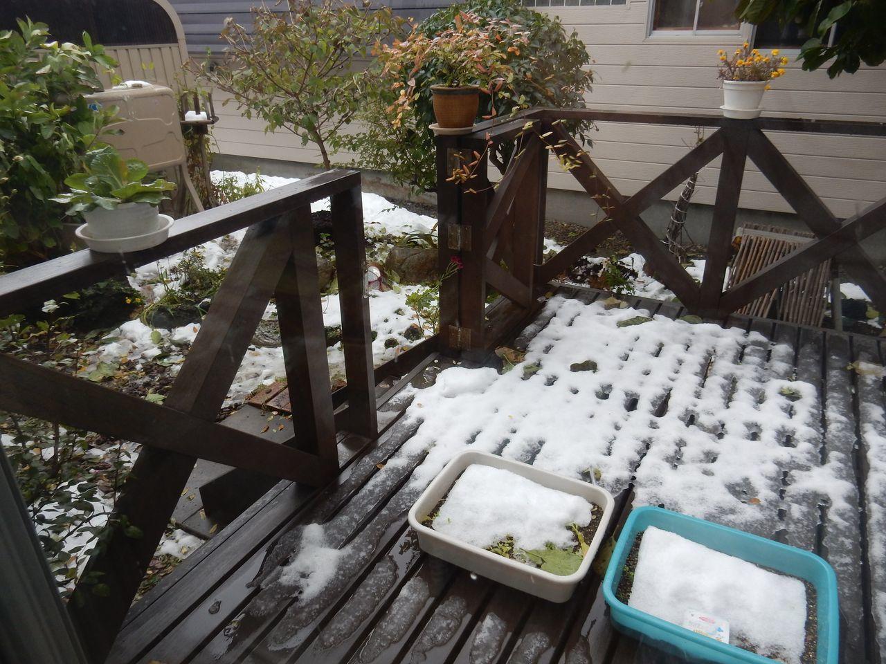 着々と積雪は減って_c0025115_20512511.jpg