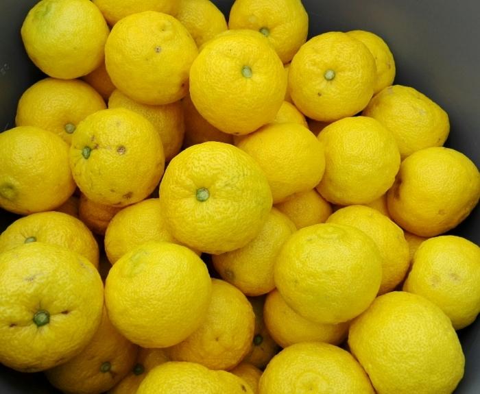 柚子の仕込み本番 &柚子茶、販売再開!_e0155231_22561130.jpg