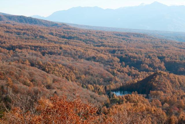 秋の日帰り信州 part 3_f0348831_21251483.jpg