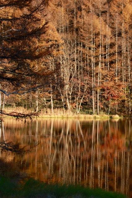 秋の日帰り信州 part 3_f0348831_21253764.jpg