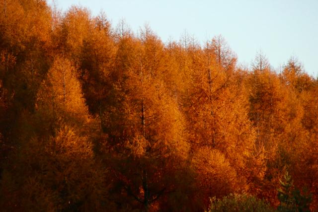 秋の日帰り信州 part 3_f0348831_21254692.jpg