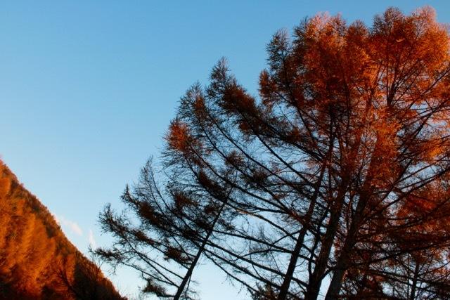 秋の日帰り信州 part 3_f0348831_21255101.jpg