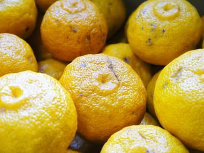 香り高き柚子 令和元年度の収穫が始まりました!「冬至用柚子」も予約受付中!ただし早い者勝ちです!_a0254656_18391647.jpg