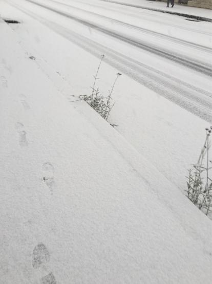 越冬かぶ!?_a0356060_16234676.jpg