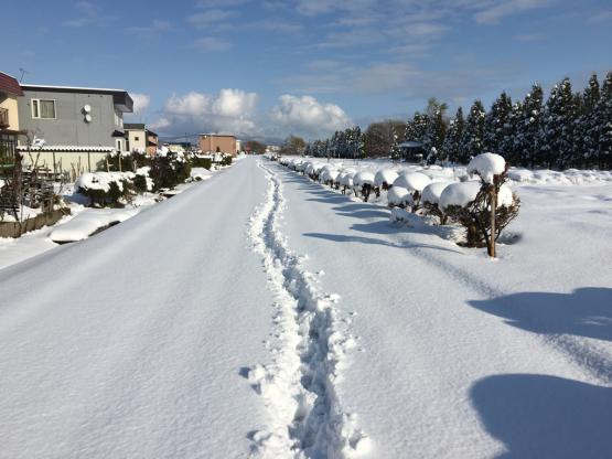 越冬かぶ!?_a0356060_16234752.jpg