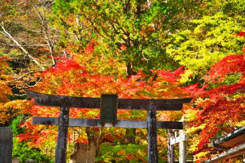 古峯原(こぶがはら) 古峯(ふるみね)神社の紅葉1_a0263109_18303673.jpg