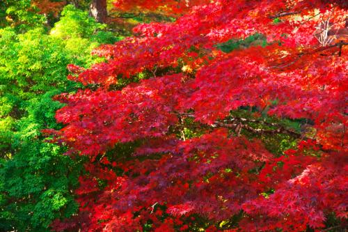 古峯原(こぶがはら) 古峯(ふるみね)神社の紅葉1_a0263109_18321150.jpg