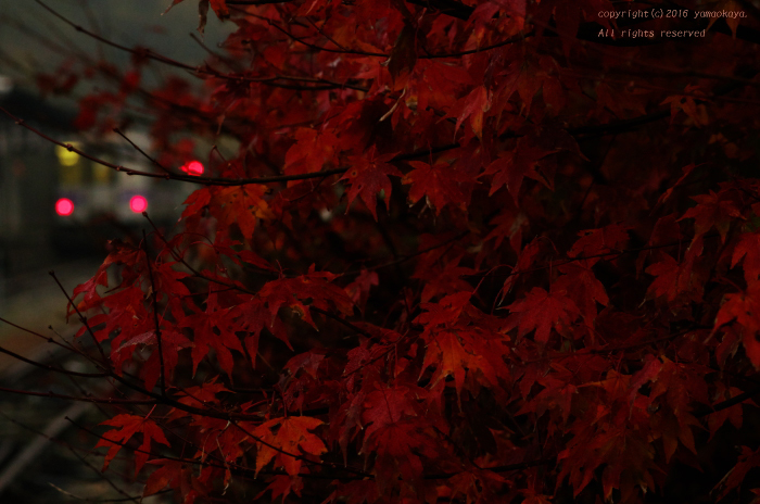 赤く色づく_d0309612_22013084.jpg