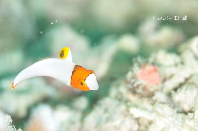 幼魚のシーズン_c0211615_16464310.jpg
