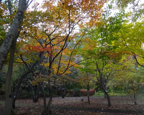 弘前公園の紅葉と原種シクラメンなど_a0136293_12142825.jpg