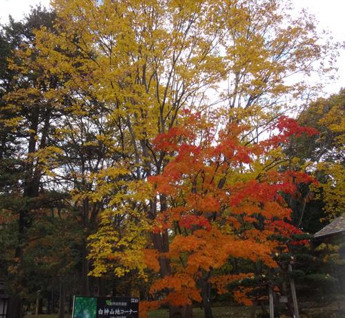 弘前公園の紅葉と原種シクラメンなど_a0136293_12153483.jpg