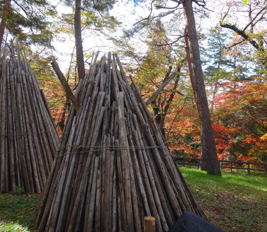 弘前公園の紅葉と原種シクラメンなど_a0136293_13173833.jpg