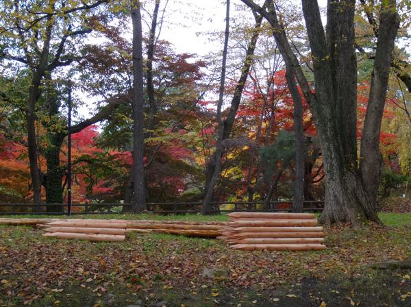 弘前公園の紅葉と原種シクラメンなど_a0136293_13175947.jpg