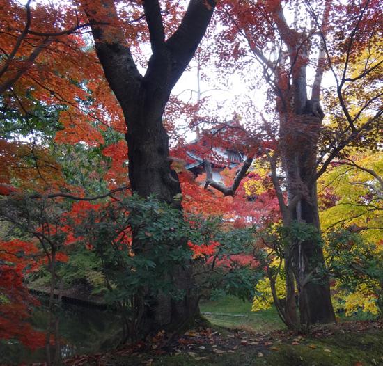 弘前公園の紅葉と原種シクラメンなど_a0136293_13193148.jpg