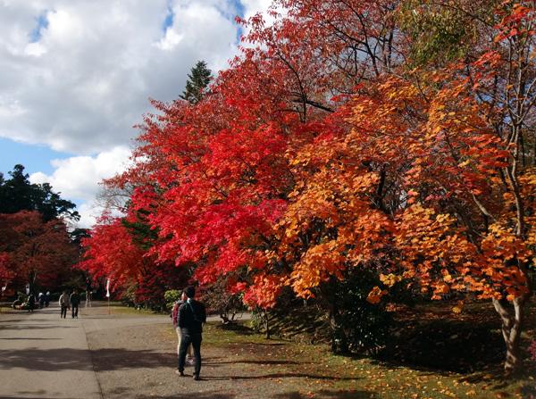 弘前公園の紅葉と原種シクラメンなど_a0136293_13244262.jpg
