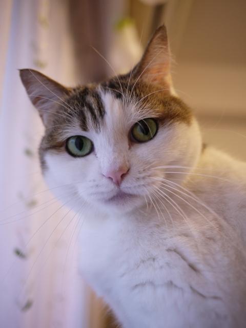 猫のお留守番 さくらちゃん編。_a0143140_20144145.jpg