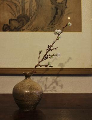 花だより 寒桜 高麗瓶_a0279848_11365583.jpg