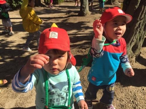 2・3歳児 くま・きりん組  どんぐり拾いへ_c0151262_12474391.jpg