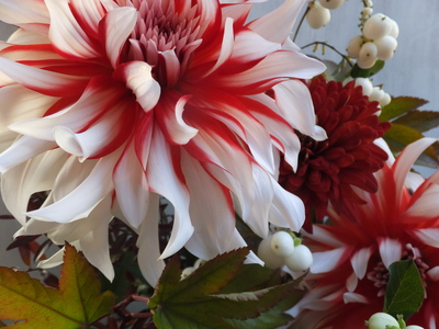 オークリーフ(赤っぽい花)_f0049672_1434128.jpg
