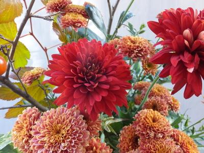 オークリーフ(赤っぽい花)_f0049672_14372867.jpg