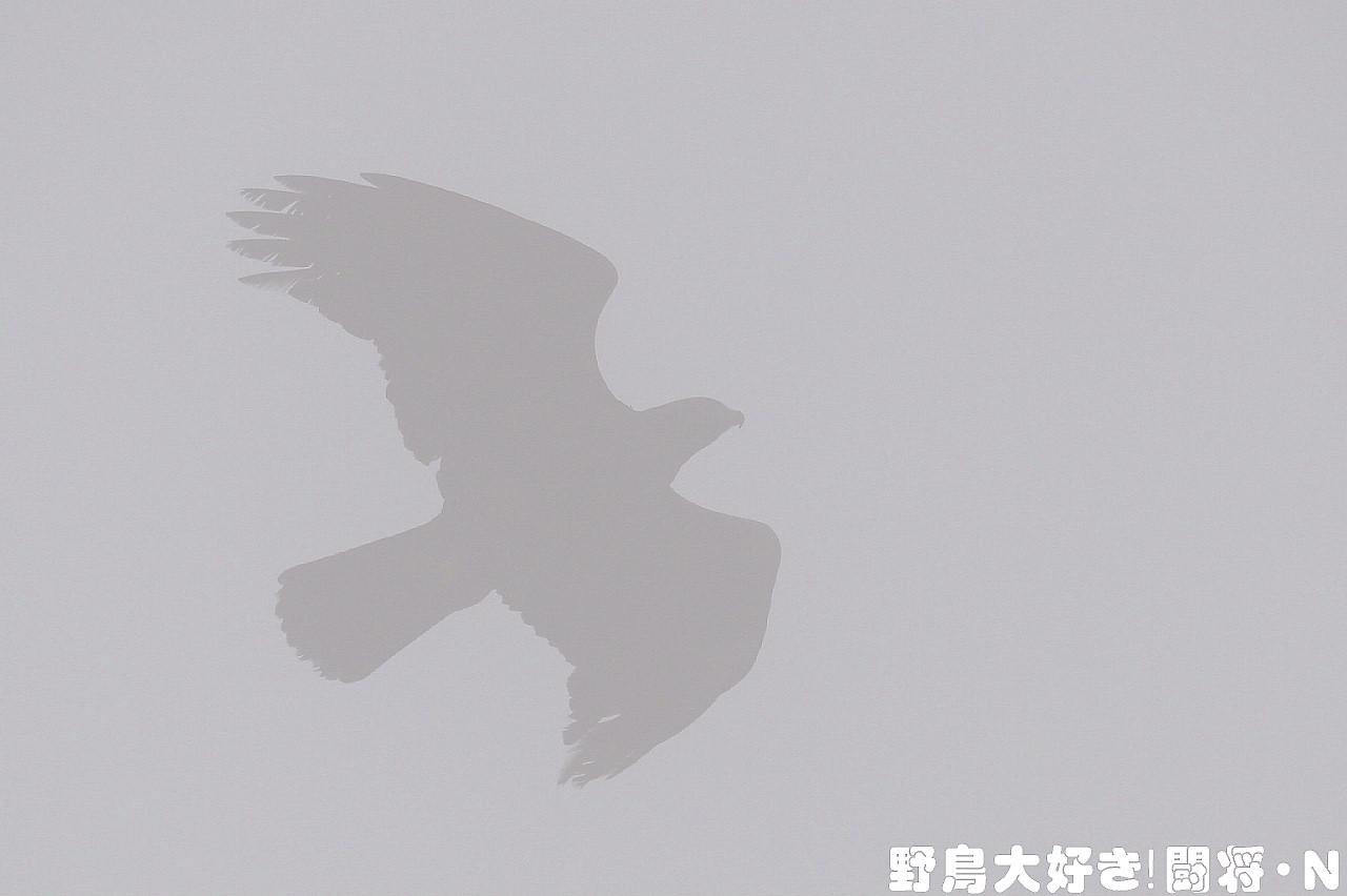 f0059882_6434845.jpg