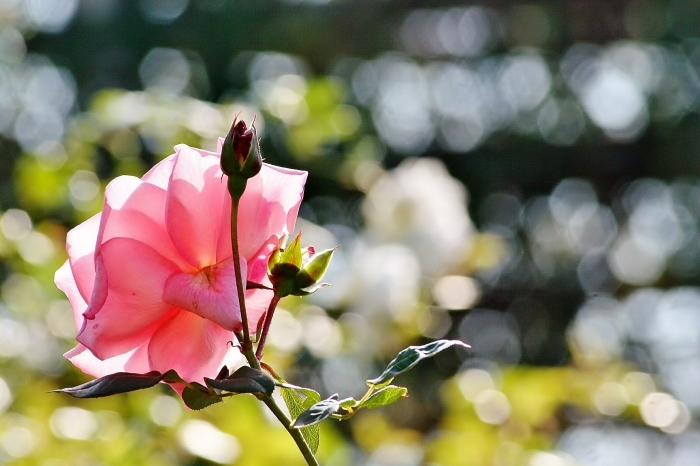 f0195711_20074384.jpg