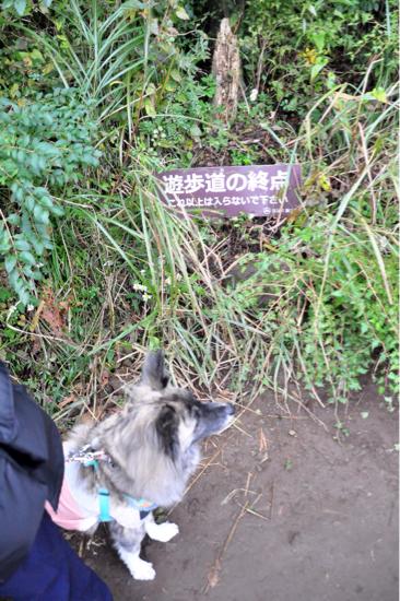 2016 秋の箱根旅行 その② 11/4編_f0329311_19234030.jpg