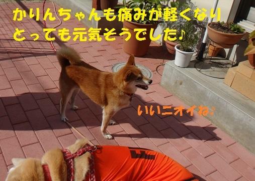 f0121712_09301227.jpg