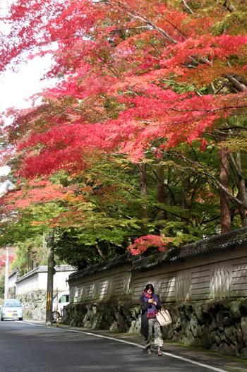 紅葉探訪3 紙屋川_e0048413_20362485.jpg