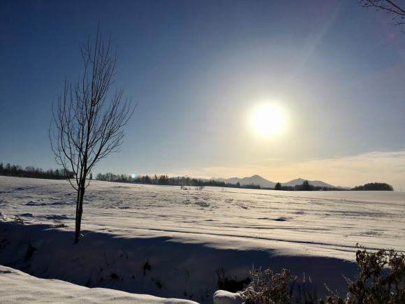 すっかり雪景色_f0096216_08442999.jpg
