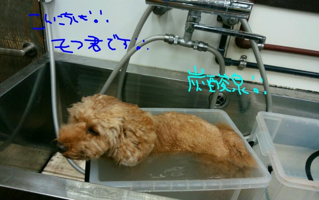 映画_b0130018_20115590.jpg