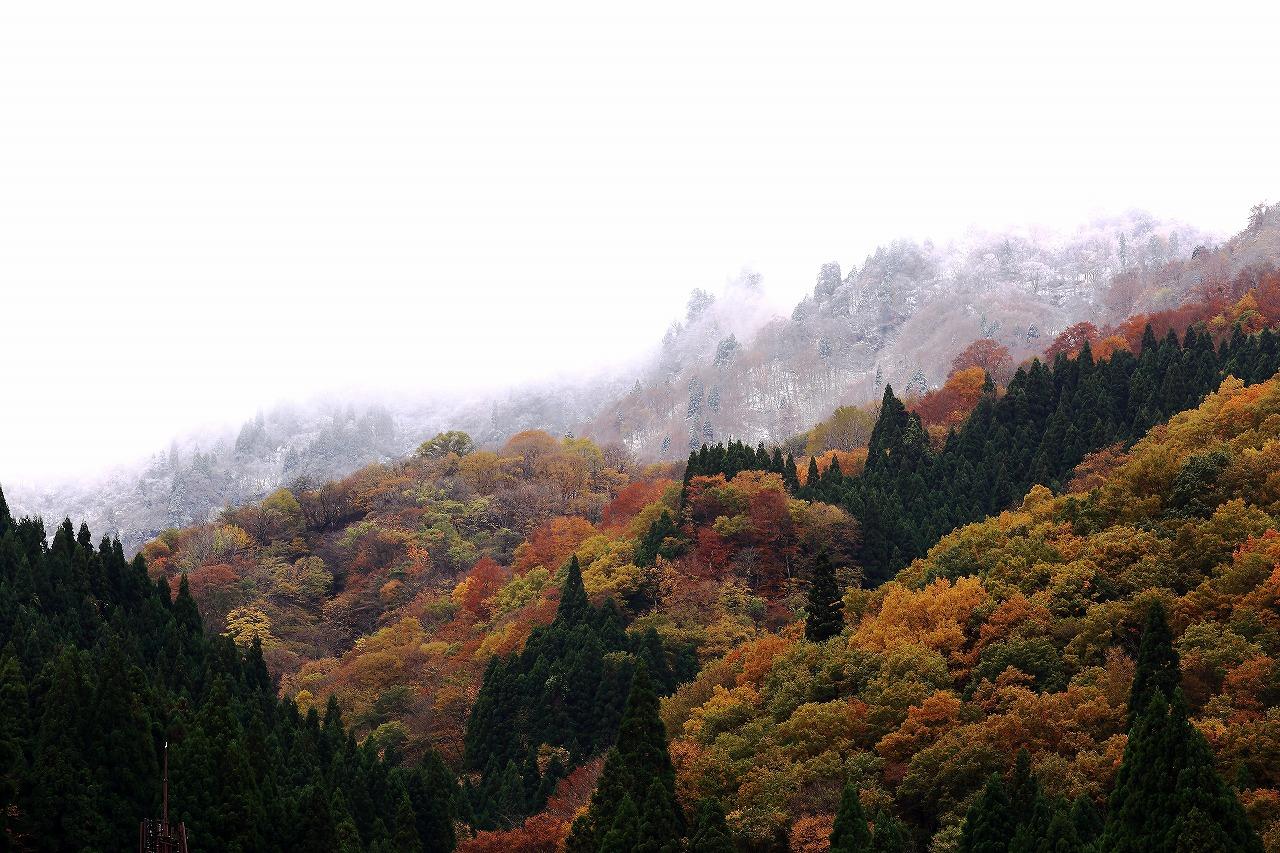 秋と冬_a0294534_19502113.jpg