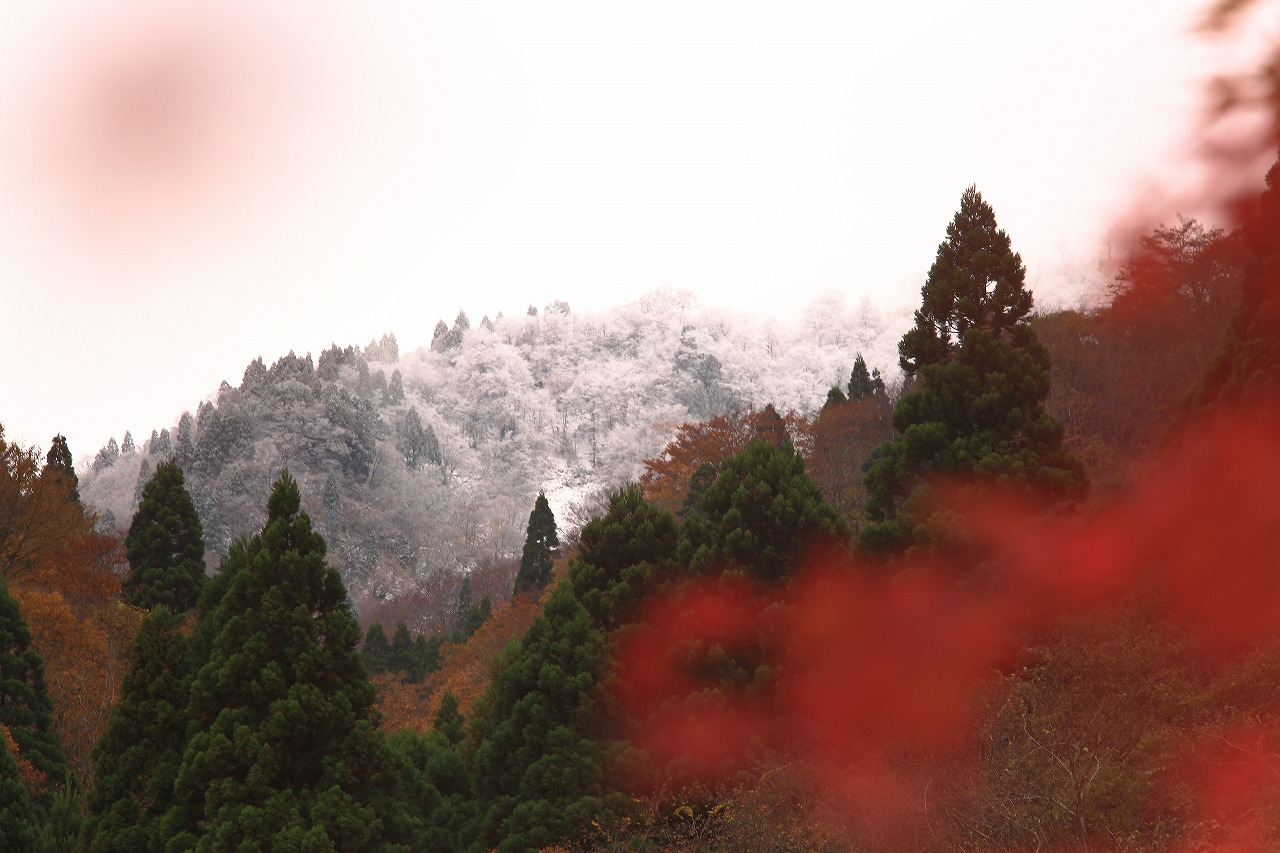 秋と冬_a0294534_19522282.jpg