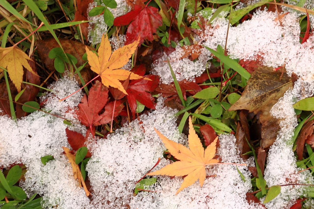 秋と冬_a0294534_19532645.jpg