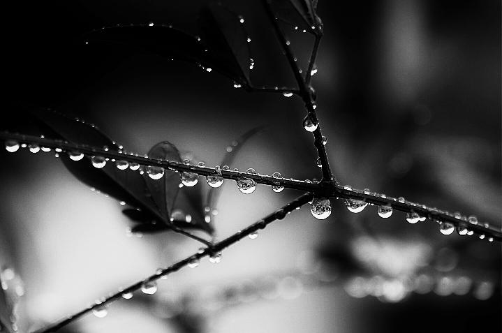 冷たい雨_b0314043_20540058.jpg