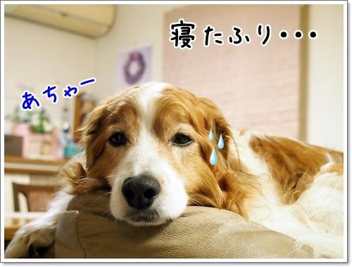 d0013149_22003882.jpg