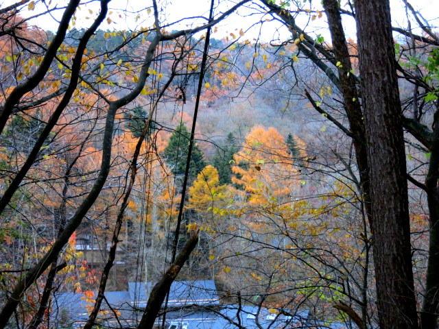 Art of Forest Autumn*ニコライ・バーグマン @軽井沢高原教会_f0236260_03210518.jpg