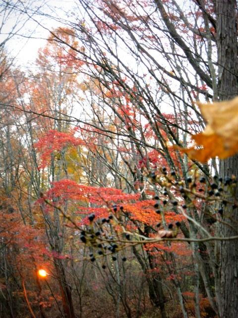 Art of Forest Autumn*ニコライ・バーグマン @軽井沢高原教会_f0236260_03234996.jpg