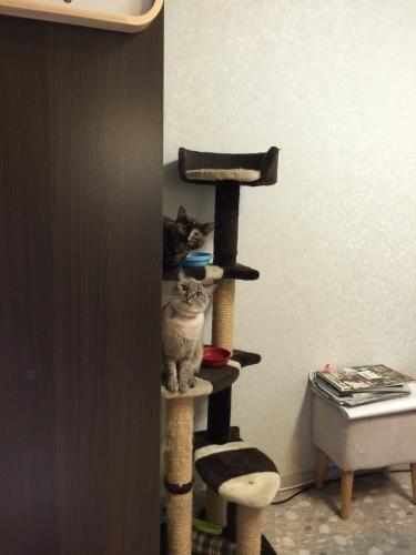 My kittens._c0153966_19033822.jpeg